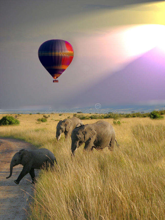 Balloon Safari stock image