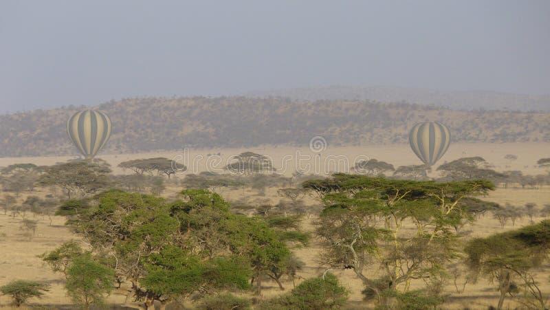 Ballooning over het Nationaal Park Serengeti in Afrika stock afbeeldingen