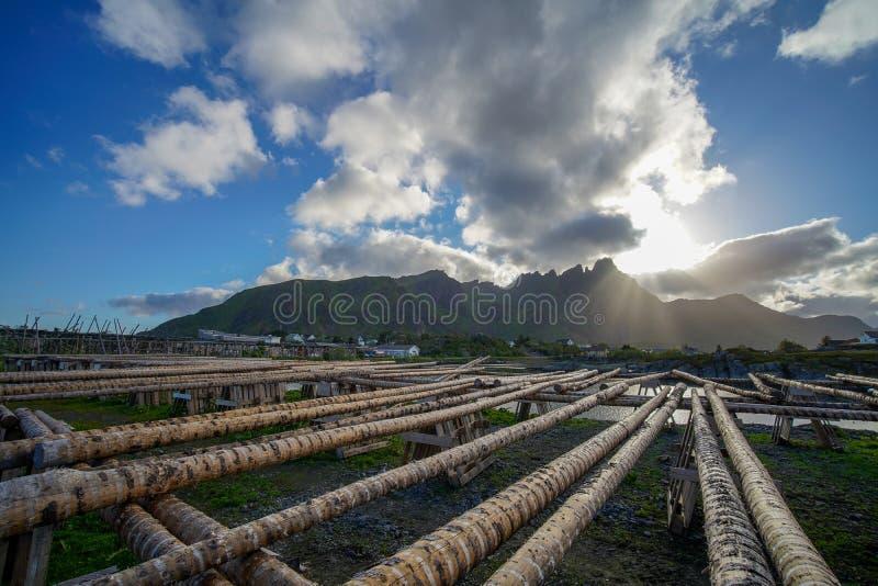 Ballstad, Noruega - 28 de junho de 2018: Estrutura de madeira em Lofoten para secar peixes imagens de stock royalty free