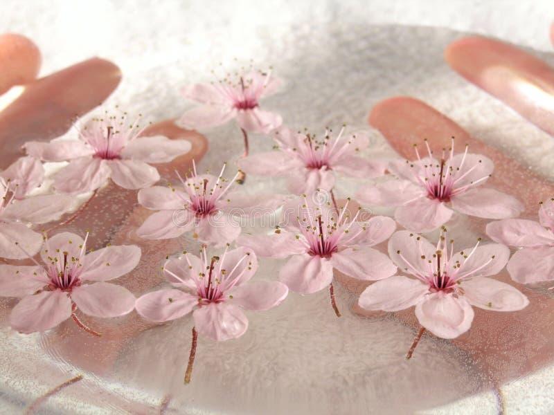 Balneario casero - flores de un color de rosa del litte imagen de archivo