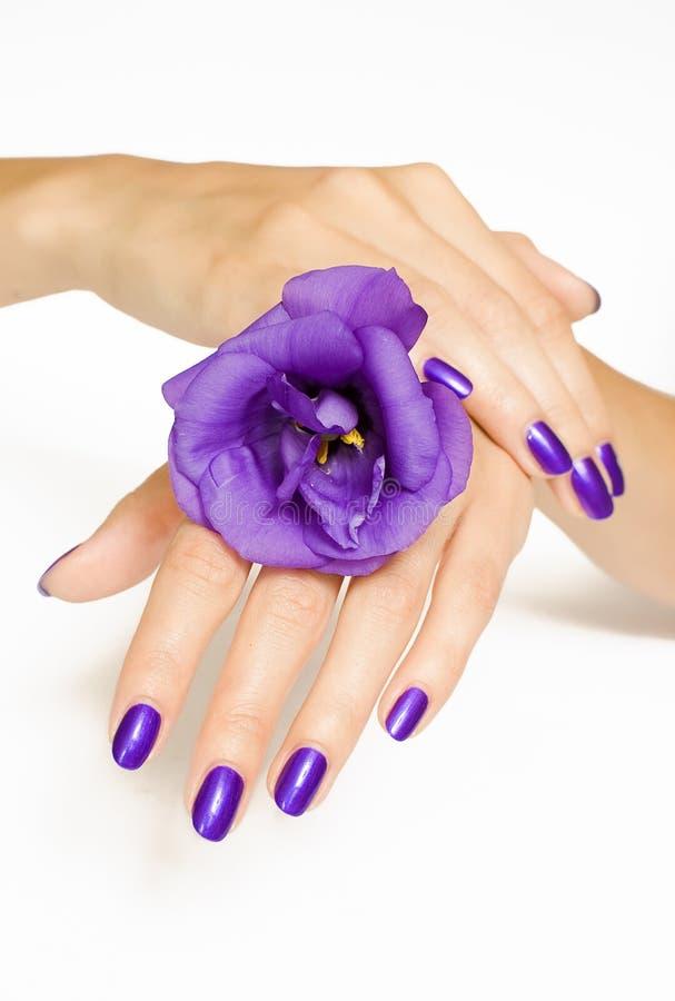 Balneario de la manicura que cuida en exceso con la flor púrpura imagen de archivo libre de regalías