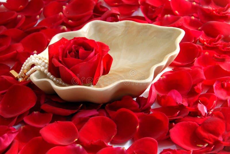 Balneario rojo de los pétalos de la flor de Rose aromatherapy imagen de archivo libre de regalías