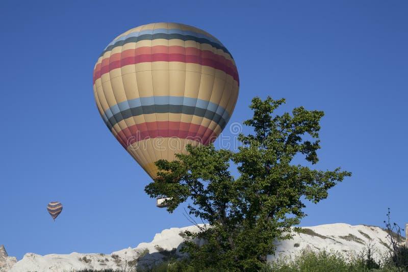 Balony rosnący i drzewo obrazy royalty free