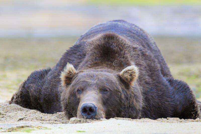 Baloo η αρκούδα στοκ φωτογραφίες