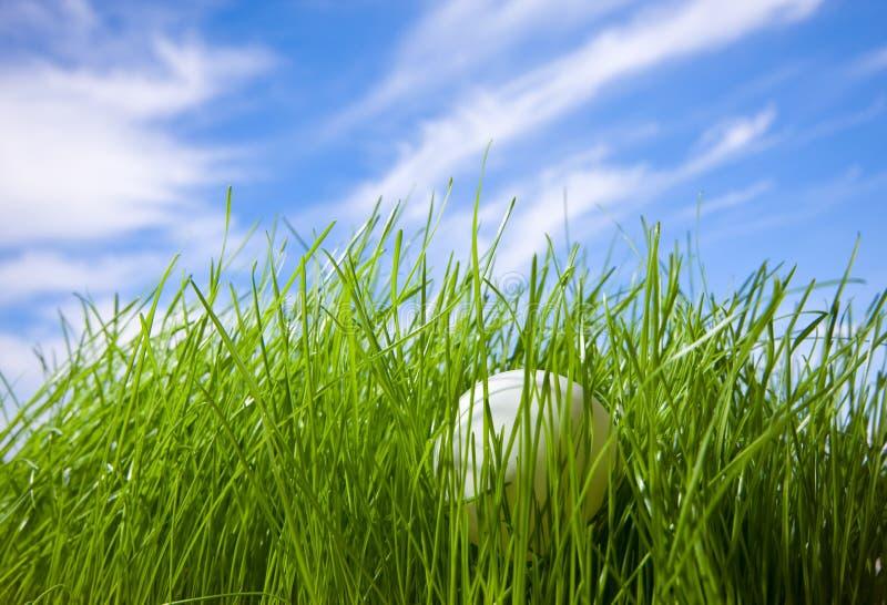 balowa trawa chujący stołowy tenis obraz stock