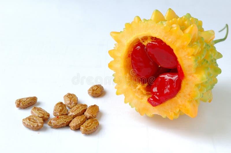Balsam pear stock image