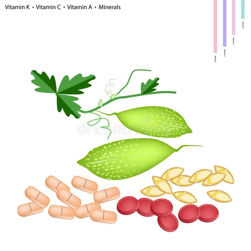Balsam Pear with Vitamin K, C, A and Minerals. Healthcare Concept, Illustration of Balsam Pear or Bitter Gourd with Vitamin K, Vitamin C, Vitamin A and Minerals royalty free illustration