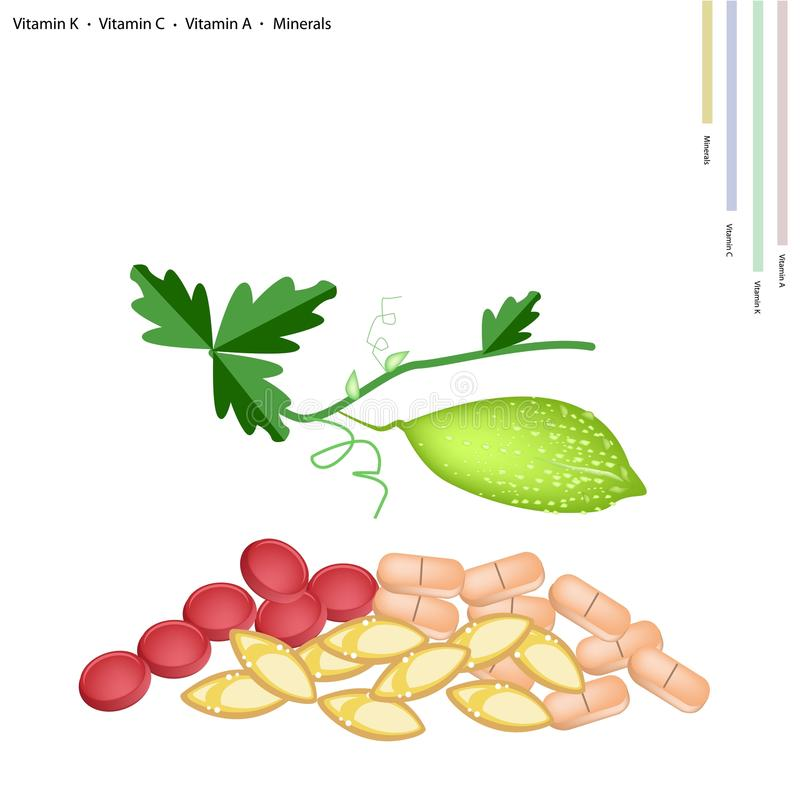 Balsam Pear with Vitamin K, C, A and Minerals. Healthcare Concept, Illustration of Balsam Pear or Bitter Gourd with Vitamin K, Vitamin C, Vitamin A and Minerals vector illustration
