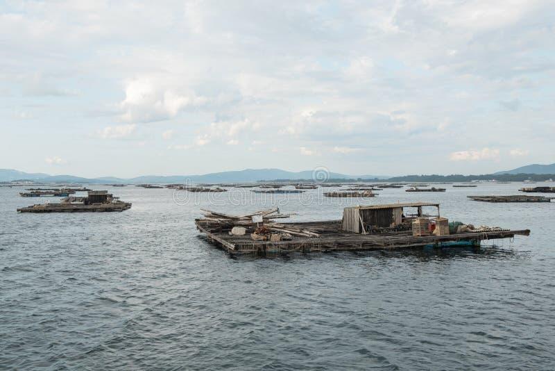 Balsas de la acuicultura del mejillón, Batea, en el estuario de Arousa foto de archivo