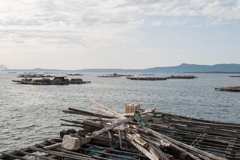Balsas de la acuicultura del mejillón, Batea, en el estuario de Arousa foto de archivo libre de regalías