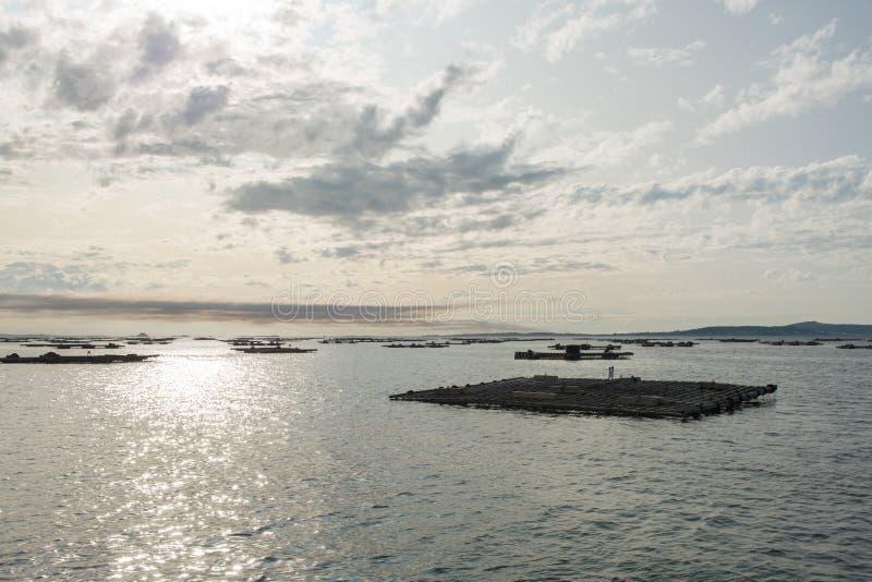 Balsas de la acuicultura del mejillón, Batea, en el estuario de Arousa imagen de archivo