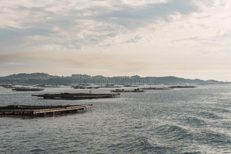 Balsas de la acuicultura del mejillón, Batea, en el estuario de Arousa fotografía de archivo