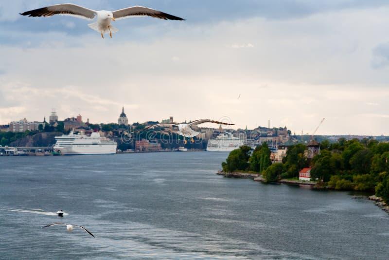 baltic blisko seagull dennego brzeg Stockholm fotografia royalty free