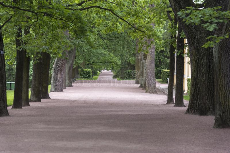 Tree lined avenue in the grounds of Catherine Palace St Petersburg Russia. Baroque 18th-century palace with large grounds where Russian royal family spent royalty free stock photos
