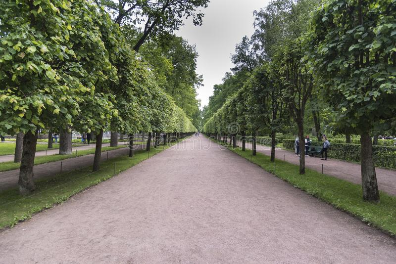 Tree lined pathway in the grounds of Peterhof Palace St Petersburg Russia. Majestic ensemble of fountains with unique, opulent architecture. Peterhof Palace is royalty free stock photos