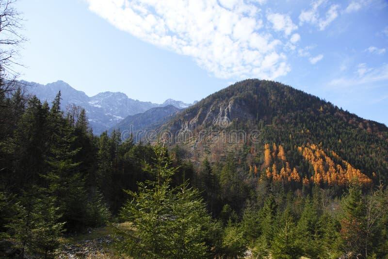 Baltic redwoods