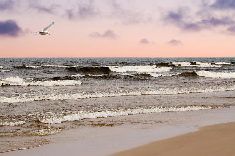 Baltic Sea. The beach on the Baltic Sea in the evening royalty free stock images