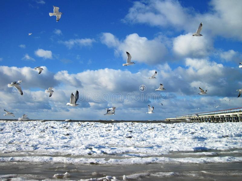 Baltic sea and seagulls in winter, Lithuania royalty free stock photos