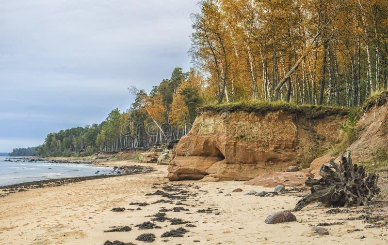 Baltisch strand bij de herfst dichtbij dorp van Tuja, Letland royalty-vrije stock foto