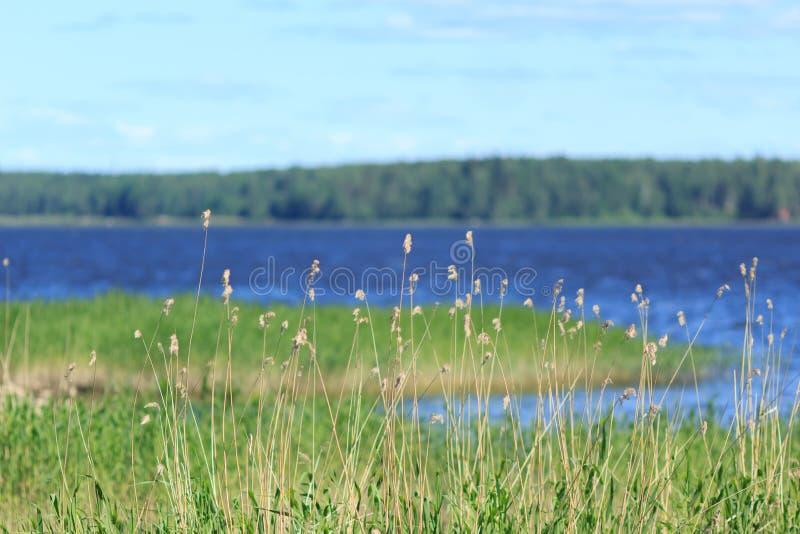 Baltisk kust fotografering för bildbyråer