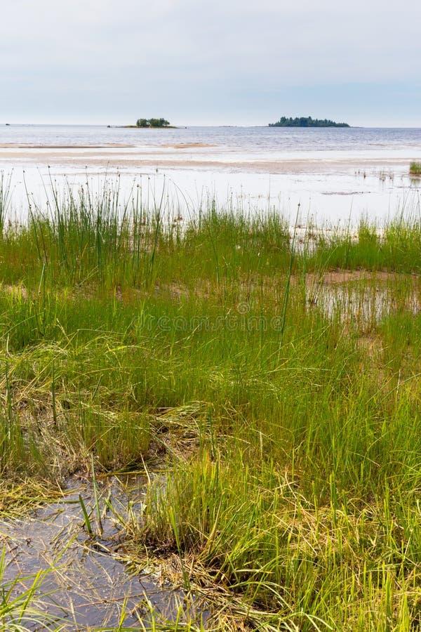 Baltiskt sjösidalandskap i sommar royaltyfri bild