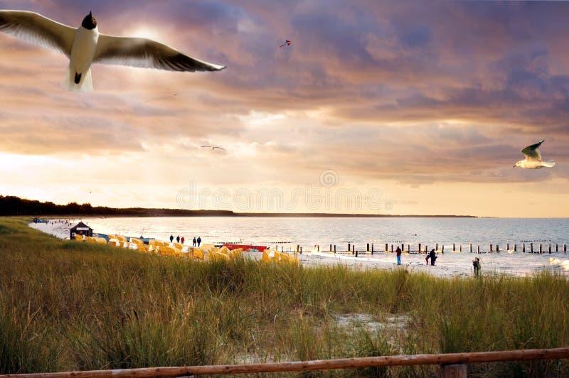 baltiskt strandtyskhav arkivfoto