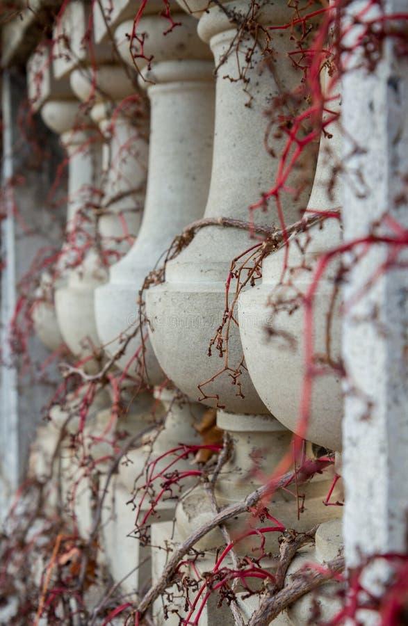 Balustres tortillant des vignes photo stock