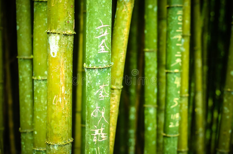 Bambù con i caratteri cinesi fotografie stock