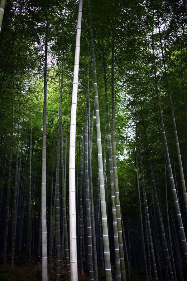 Bambù di Arashiyama immagini stock libere da diritti