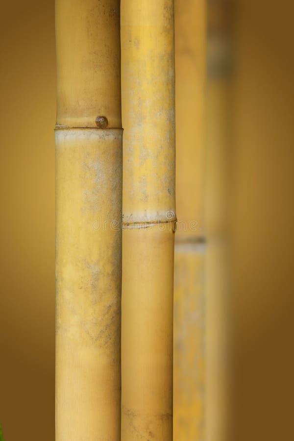 Bambù di zen fotografia stock