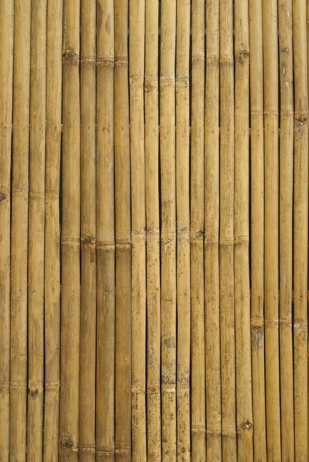 Bambù dorato in Tailandia fotografia stock libera da diritti