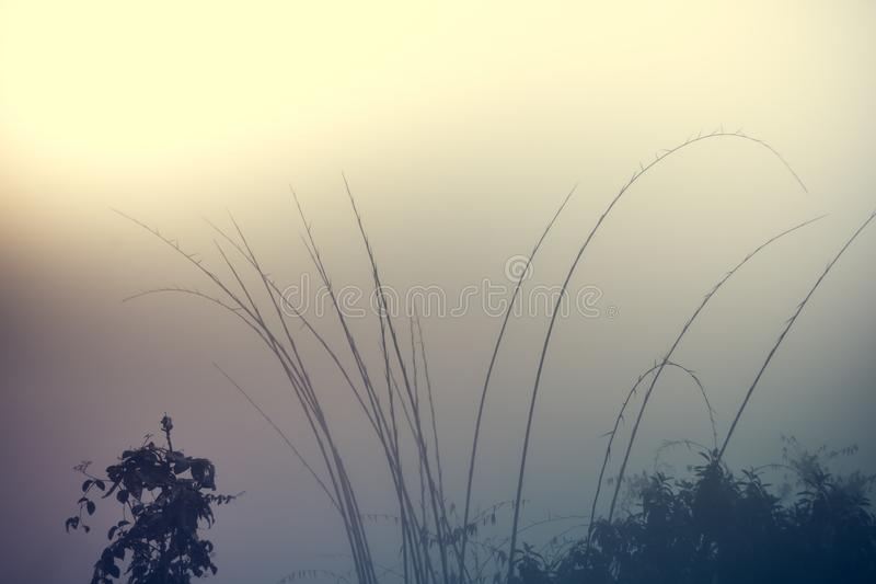 Bambù e gocce di acqua fra foschia immagine stock