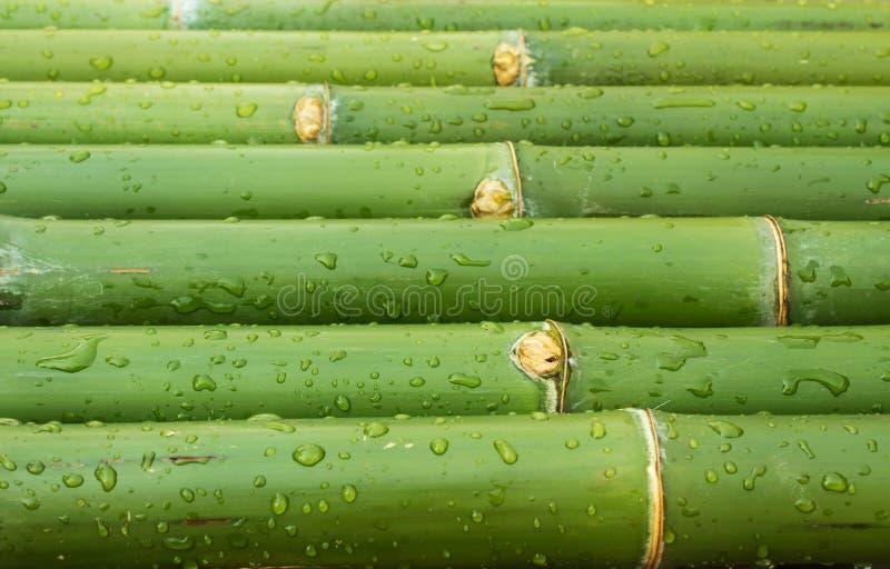 Bambù fresco immagine stock libera da diritti