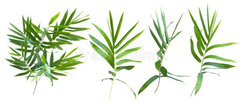Bambù isolato su fondo grigio con il percorso di ritaglio immagini stock libere da diritti