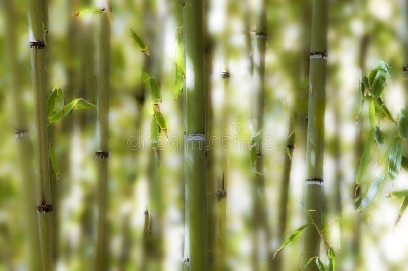 Bambù nella foresta. immagine stock
