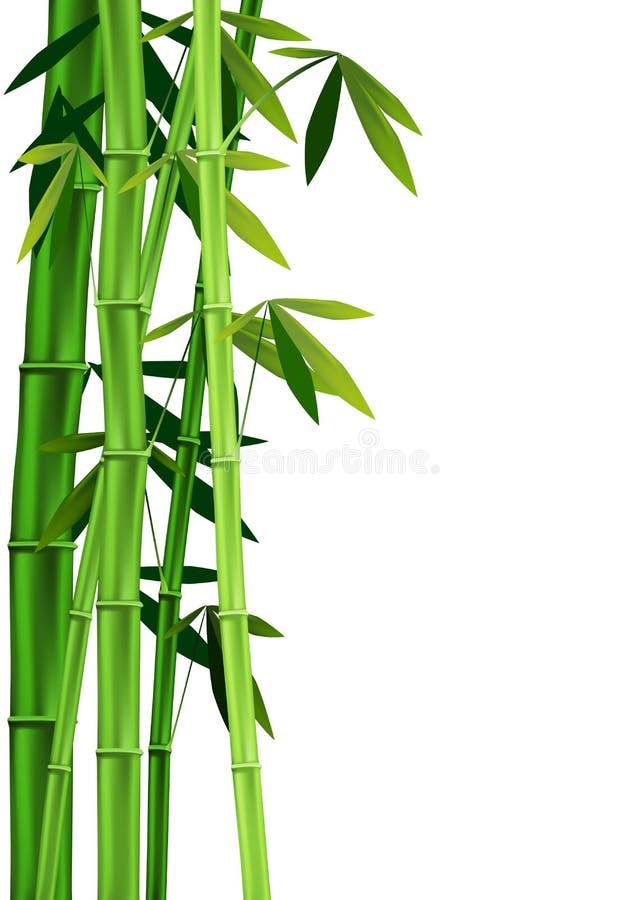 Bambù su bianco illustrazione vettoriale