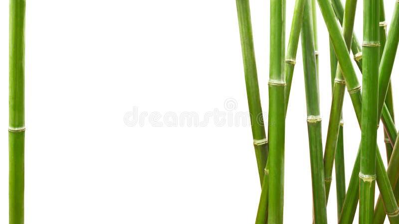 Bambù verde incorniciato su fondo bianco con lo spazio della copia fotografia stock libera da diritti