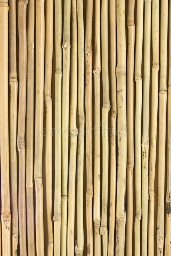Bambú fotografía de archivo