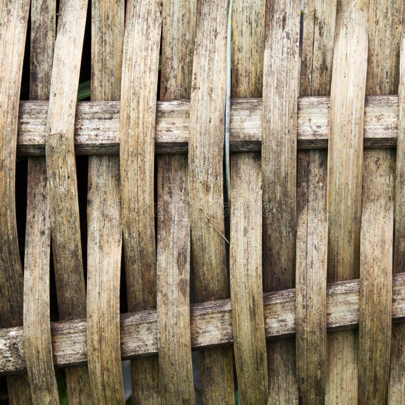 Bambú De La Armadura Imagenes de archivo