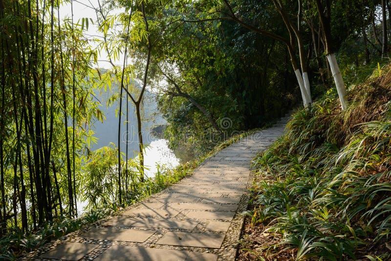 Bambú del borde del camino encendido a orillas del lago por tarde soleada del invierno fotografía de archivo libre de regalías