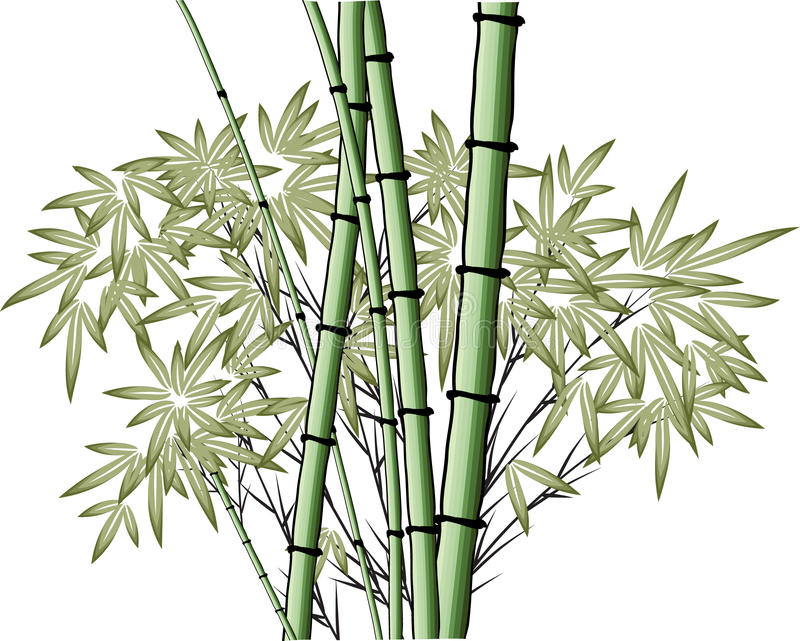 Bamb del dibujo del vector stock de ilustraci n for Color bambu pintura