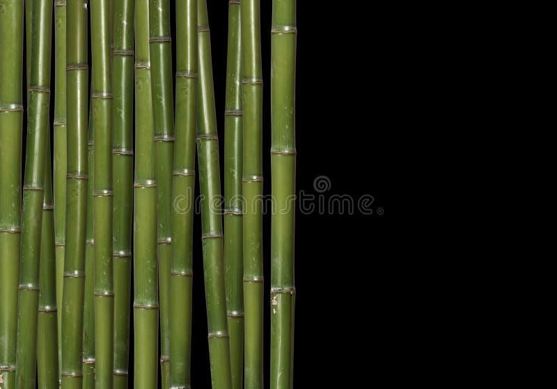 Download Bambú duro imagen de archivo. Imagen de planta, ramificación - 7283165