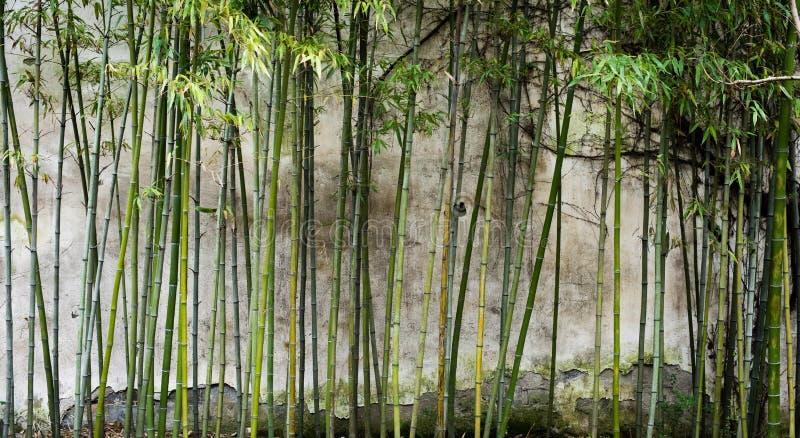 Bambú en el museo de Suzhou, puerta de piedra imagen de archivo