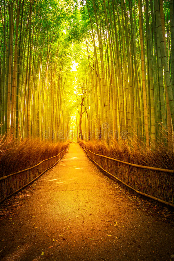 Bambú Kyoto de Arashiyama fotos de archivo
