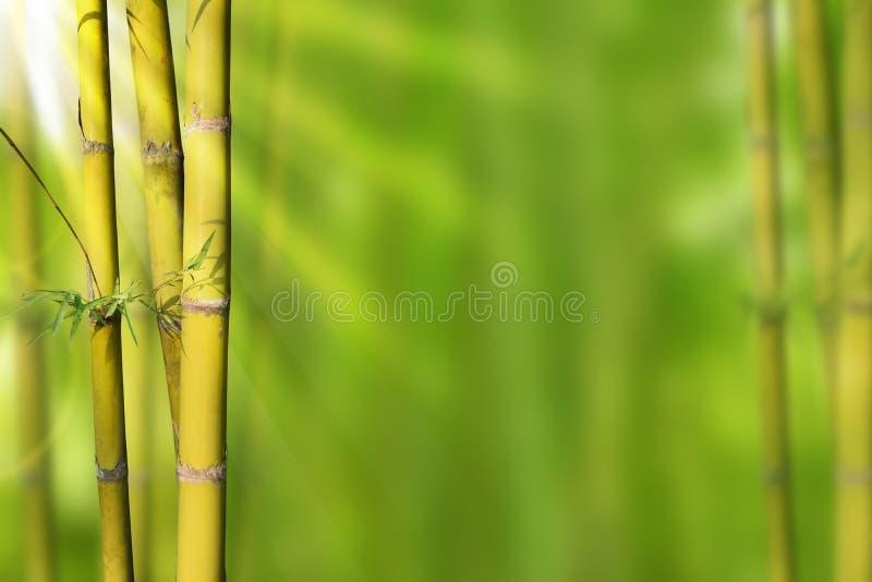Bambú verde de los troncos del oro y fondo abstracto verde fotografía de archivo libre de regalías