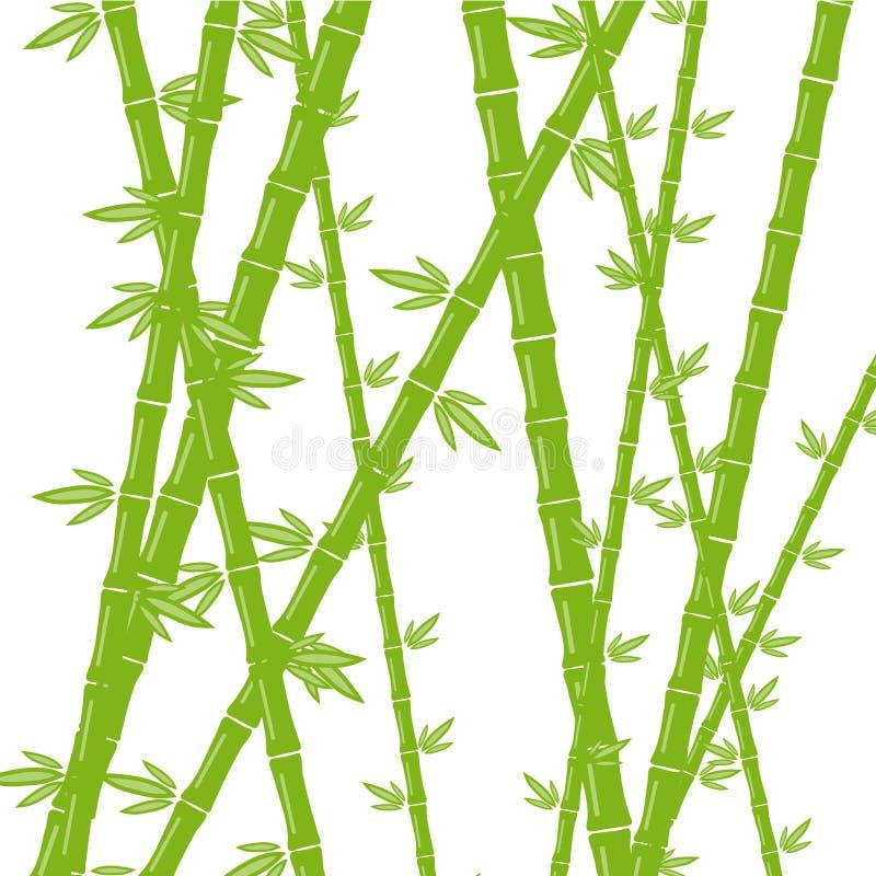 Bambú verde en un fondo blanco stock de ilustración