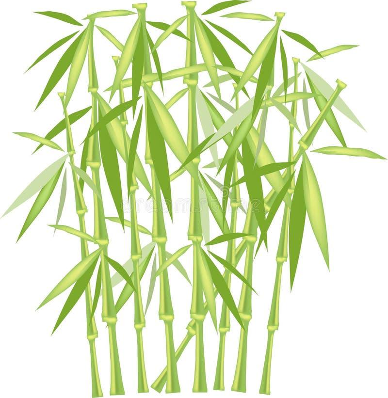 Bambú verde en un fondo blanco, objeto aislado Troncos y hojas verdes y amarillos ilustración del vector