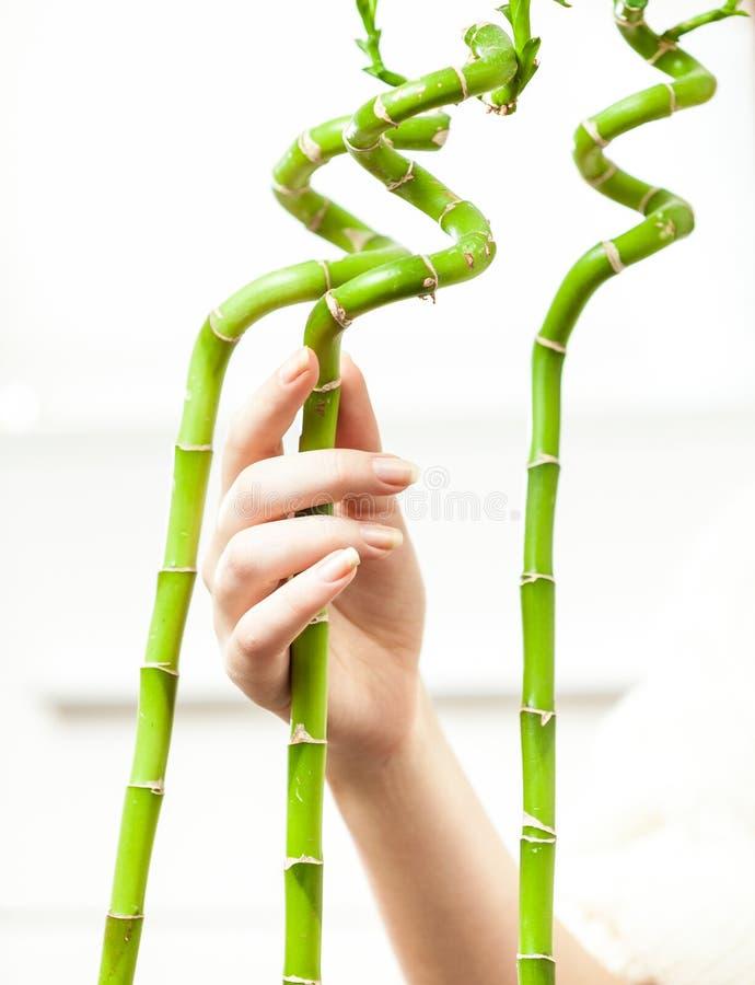 Bambúes conmovedores de la mano contra el fondo blanco imagen de archivo