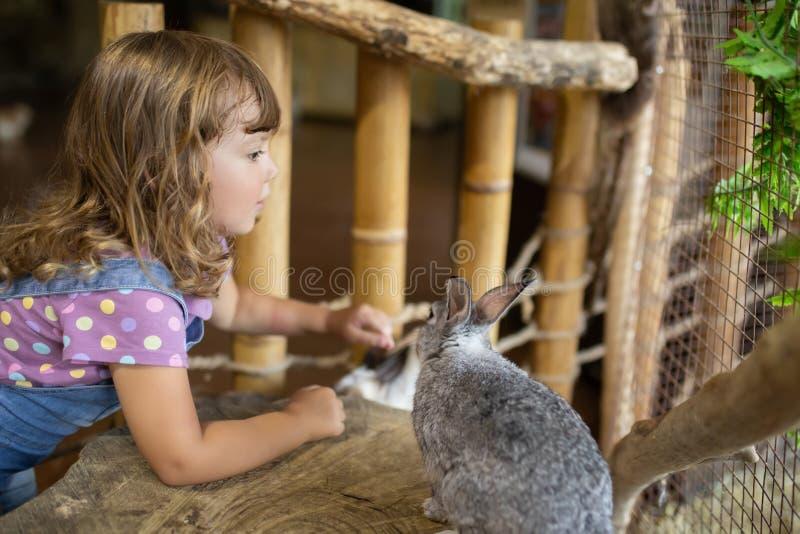 Bambina adorabile che gioca con il coniglio allo zoo di coccole immagini stock
