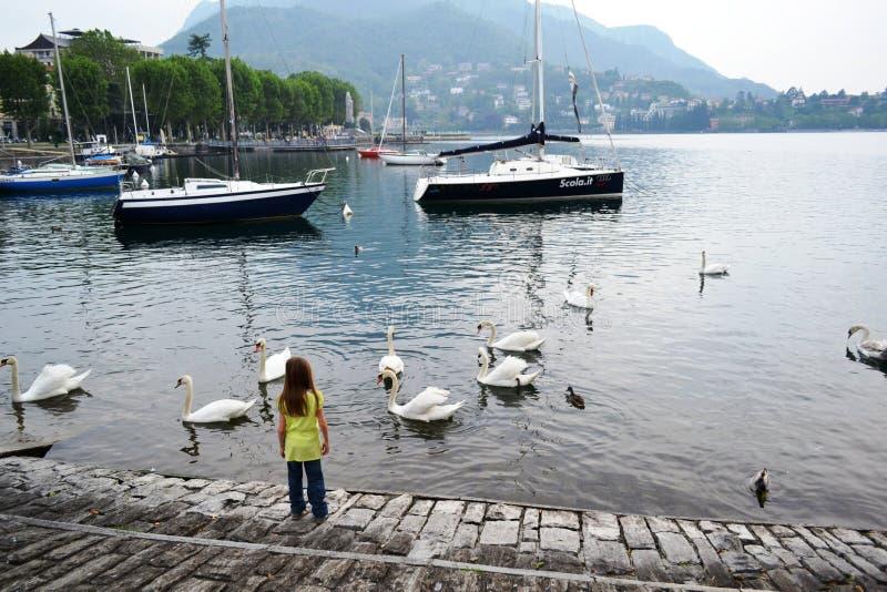 Bambina che guarda tantissimi cigni bianchi nuotare nell'acqua immagini stock libere da diritti